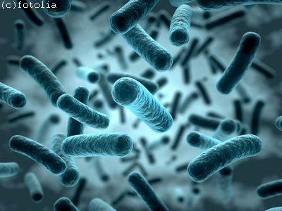 Bakterien – Die faszinierende Lebensform in uns