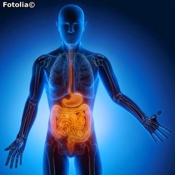 Ein gesunder Darm ist wichtig für unsere gesamte Gesundheit