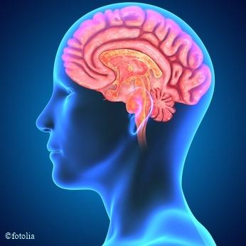 Ein gesunder Darm schützt das Gehirn der nächsten Generation